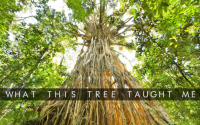 WHAT THIS TREE TAUGHT ME ABOUT ACCEPTANCE AND LIFE